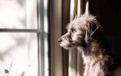 So lernt dein Hund, allein zu bleiben