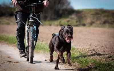 Dogscooter: Zughundesport für Mensch und Hund
