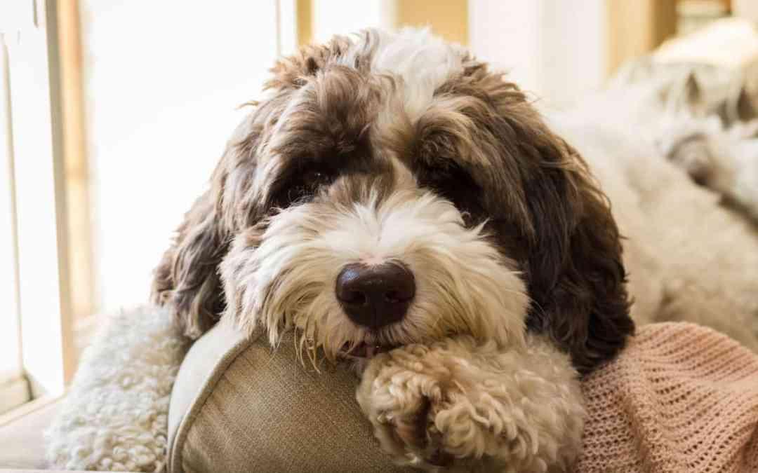 Gibt es Allergiker-Hunde?
