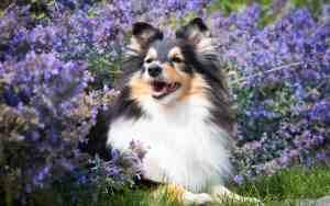 Tipps für Aromatherapie bei Hunden