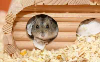 7 Tipps zur Gesundheitsvorsorge beim Hamster