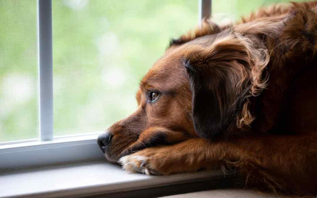 So kannst du Stress bei Hunden erkennen und auflösen