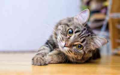 Welche Augenerkrankungen bei Katzen gibt es?