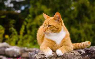 Diagnose Katzenaids: Was du nun wissen musst