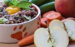 Ernährung des Hundes und das Mikrobiom