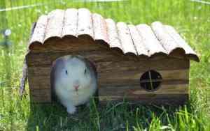 Kleintiere: Tierheim statt Zooladen