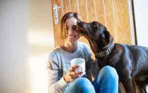 Sind Hund und Beruf miteinander vereinbar?