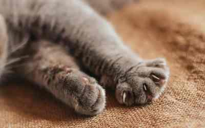 Was es bedeutet, wenn Katzen treteln