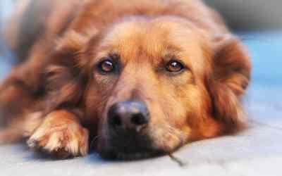 Sind Hunde im Tierheim unglücklich?