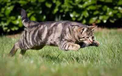 Wenn die Katze Arthrose hat
