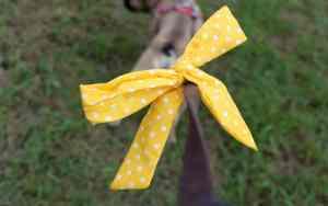 Was bedeutet die gelbe Schleife an der Leine?