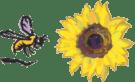 bee_sunflower_82