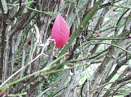 One Burning Leaf