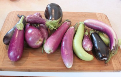 eggplant harvest in August
