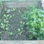 Covering Up Cold Frames