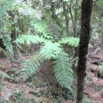 young tree fern
