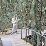 Lynda on rainforest walk