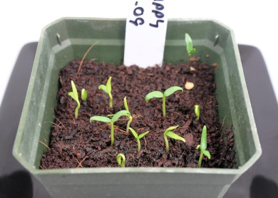 2009 Hot Happy Yummy seeds coming up