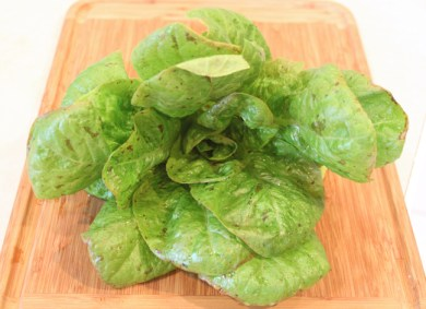 Spotted Trout lettuce, ready for salads