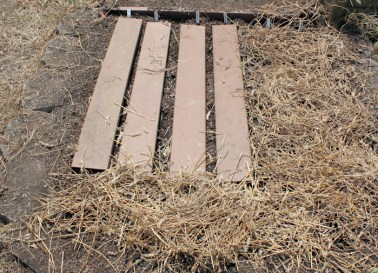 covering carrot furrows with boards