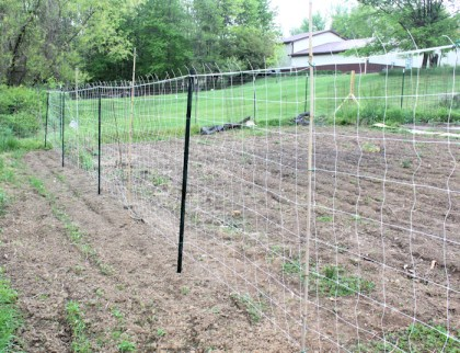 trellis for pole beans