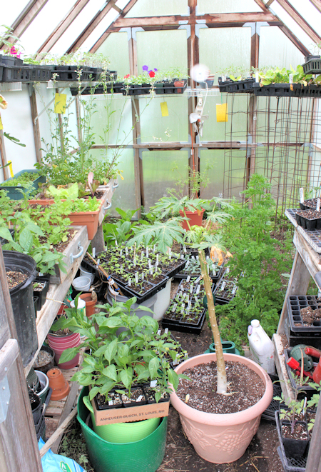 the greenhouse in early May