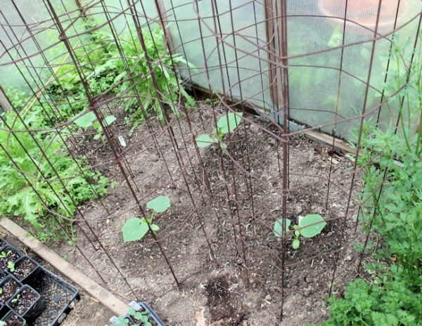 remesh cages will support the cucumbers