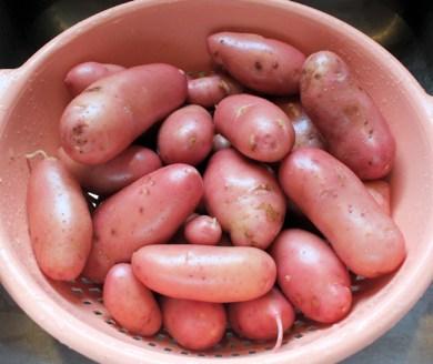 French Fingerling potatoes