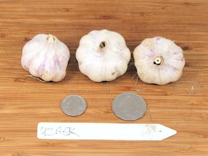 Uzbek turban garlic