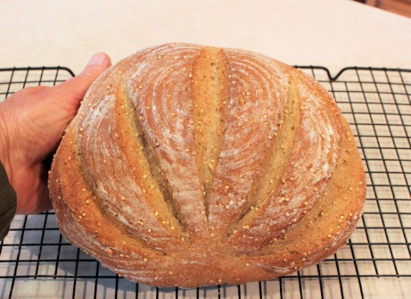 Whole Grain boule with scallop scoring