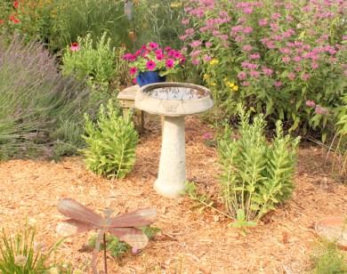 birdbath in Wild Garden