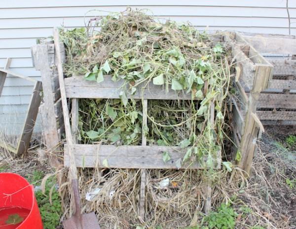 compost bin full of sweet potato vines