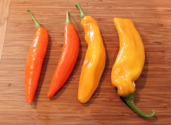 off-type Hot Happy Yummy peppers