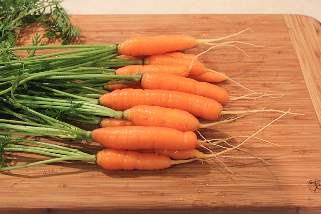 fall harvest of Yaya carrots