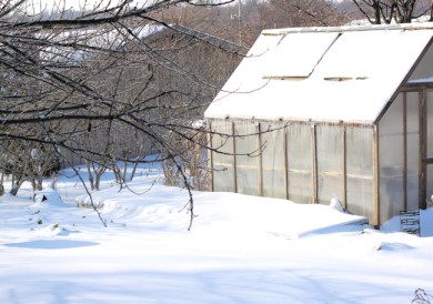 cold frames covered in snow