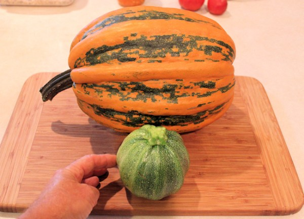 young Kumi Kumi squash hanging out with 7 pound mature one