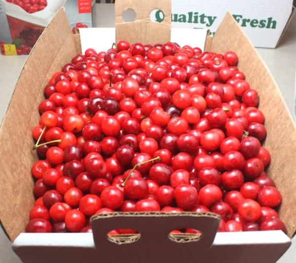 box of sour cherries