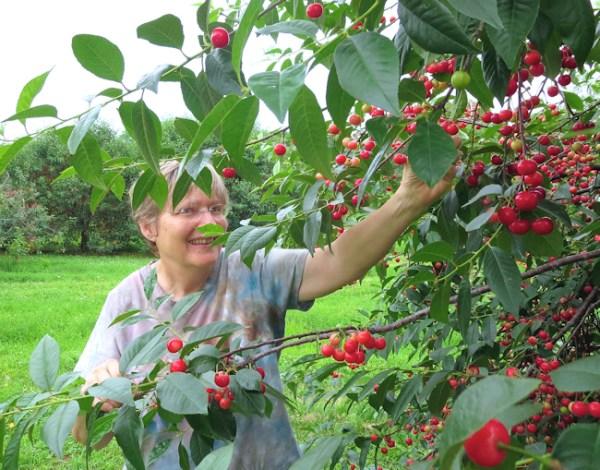 Lynda reaching for the perfect cherry