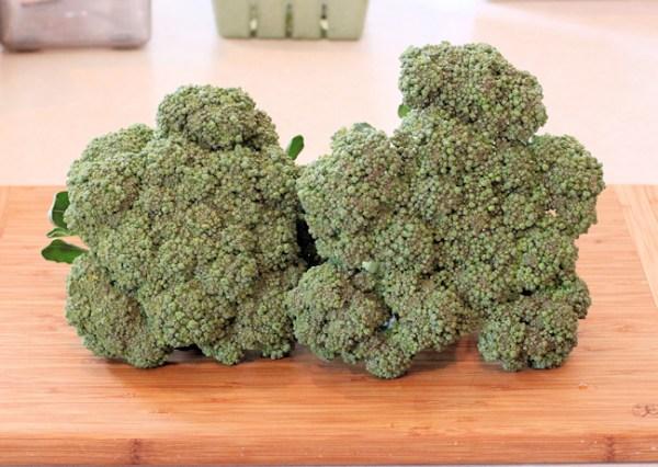Packman broccoli