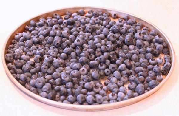 daily blueberry harvest