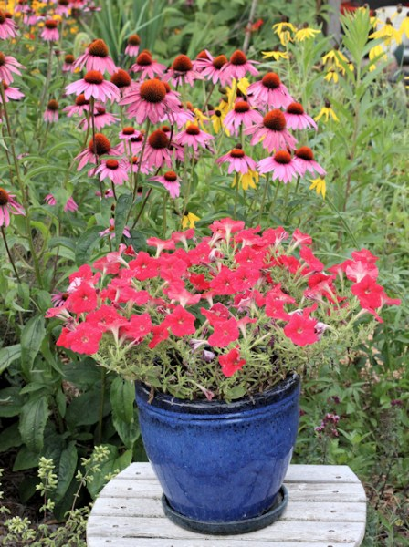 Easy Wave Red petunia growing in container