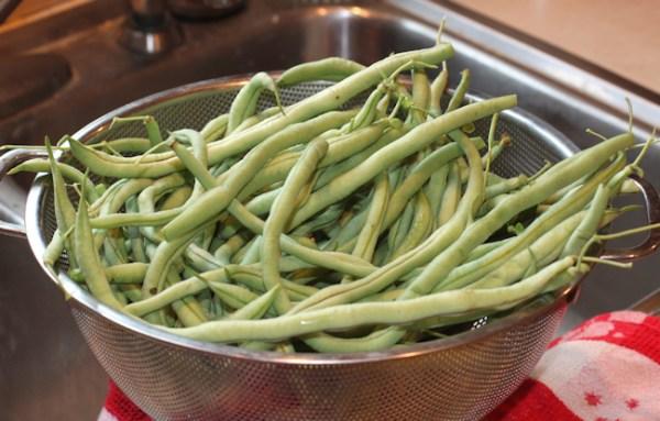 Fortex beans