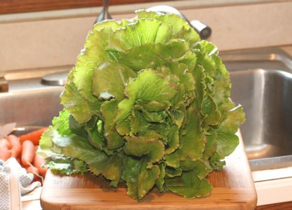 Sierra lettuce