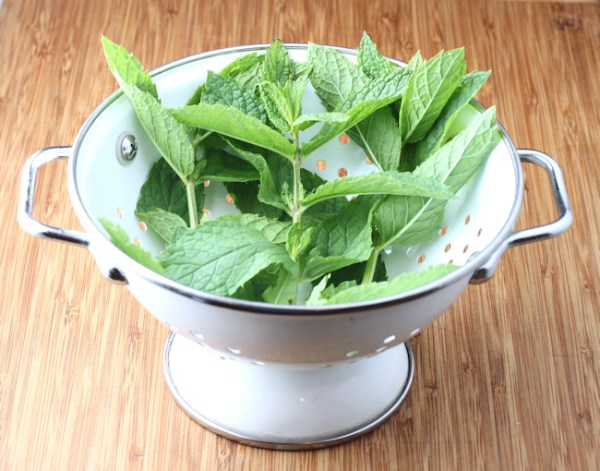 Moroccan mint for tea