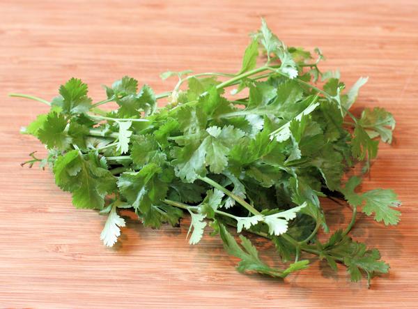 cilantro for pesto