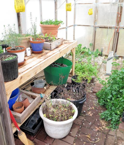 a look inside the greenhouse door
