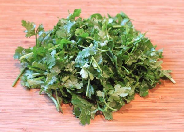 cilantro for pesto