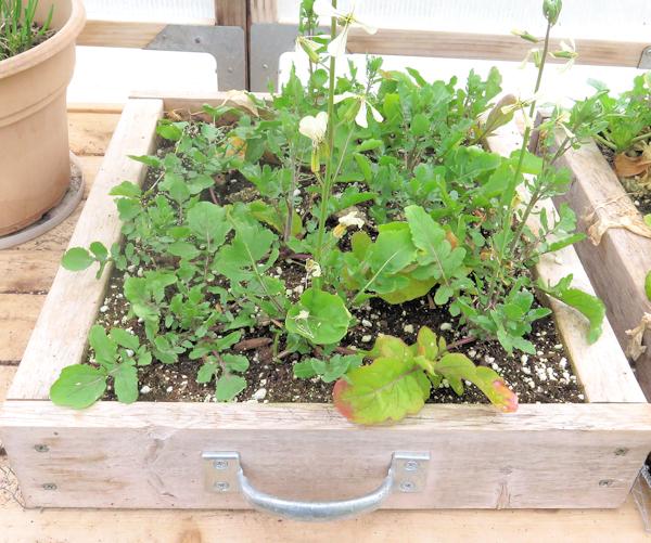 mini salad box with arugula