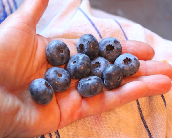 Chandler blueberries
