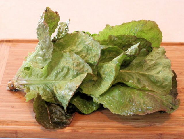 Not Red Sails lettuce